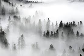 Fog Image 1